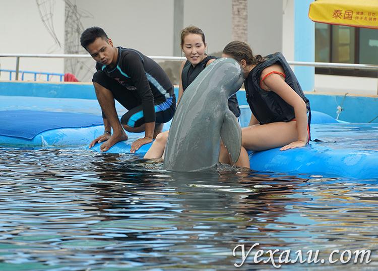Поцелуи с дельфинами в Паттайе