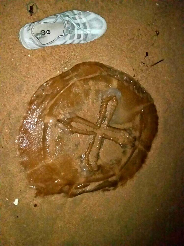 Медуза в Паттайе