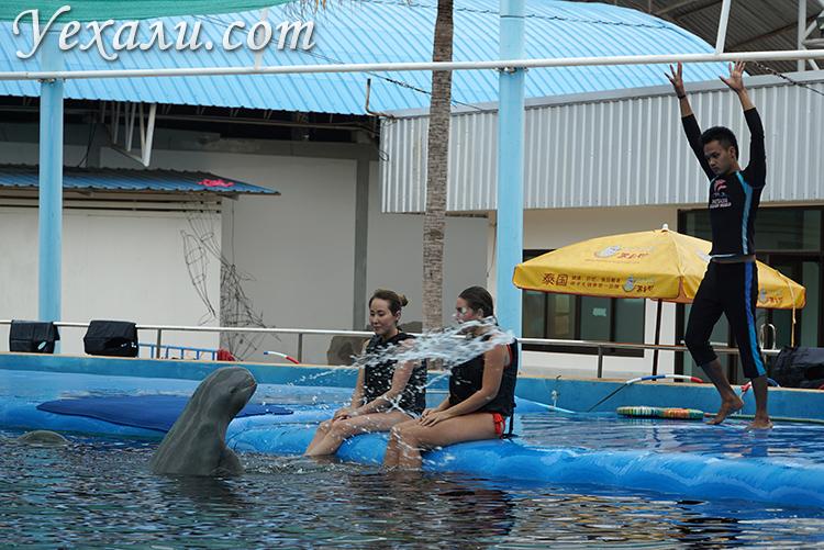 Стоит ли плавать с дельфинами в Паттайе