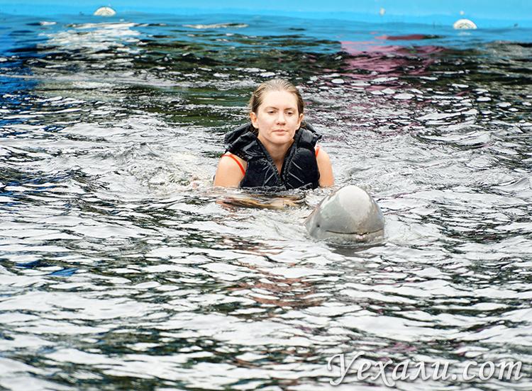Отзывы на плавание с дельфинами в Паттайе