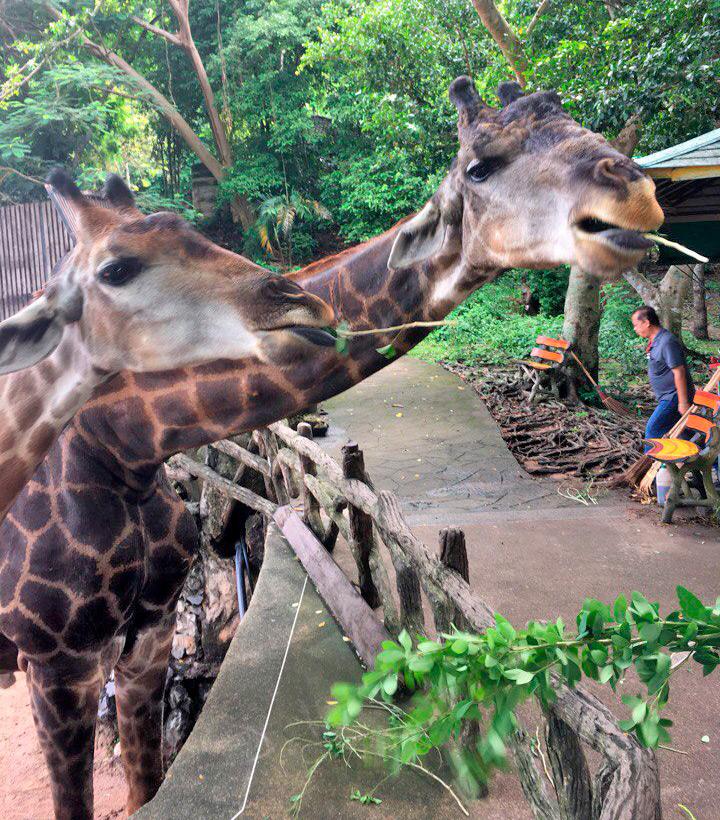 Индивидуальная экскурсия в зоопарк Кхао Кхео, Паттайя, Тайланд.