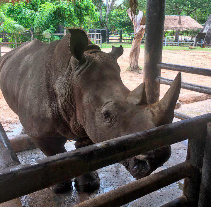Экскурсия в зоопарк Као Кео, Паттайя, Таиланд.