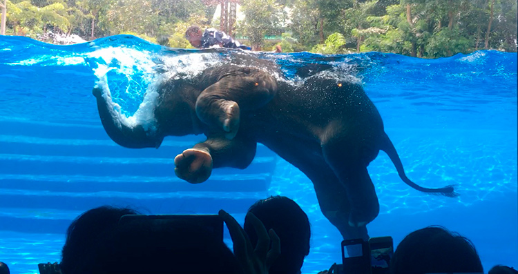 Купание слона. Зоопарк Као Кео, Таиланд.