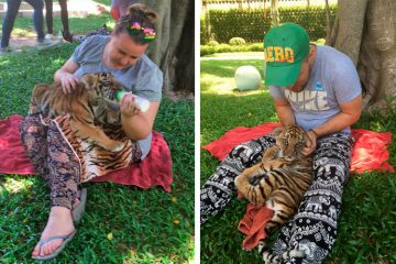 Экскурсия Дискавери 7 в 1, Паттайя, Таиланд: Тигриный зоопарк в Срираче.