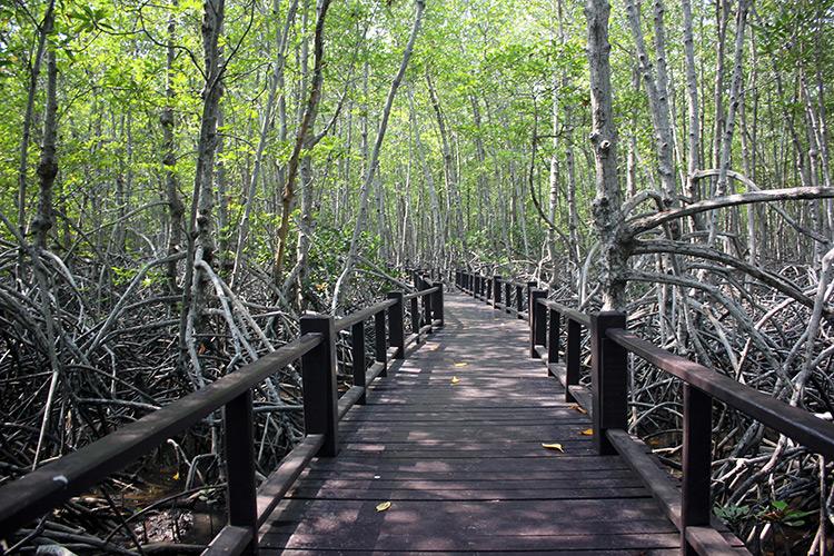 Достопримечательности Хуа Хина, Тайланд. На фото: мангровый лес.