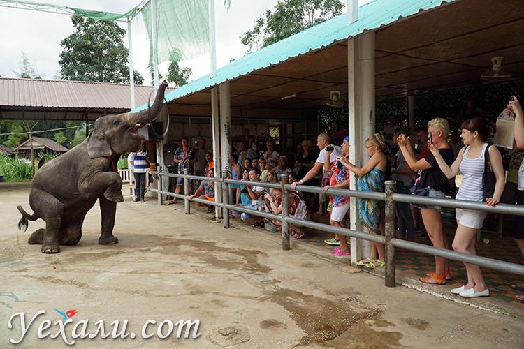 Шоу слонов на экскурсии на Квай