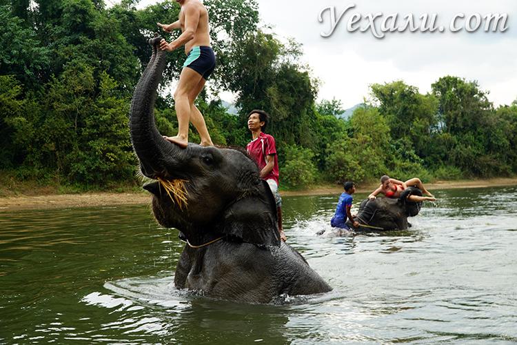 Купание со слонами на Квае