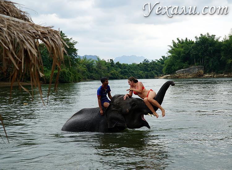 Плавание со слонами на Квае