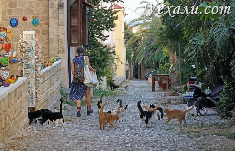 Отзывы про отдых на острове Родос, Греция. На фото: греческие коты.