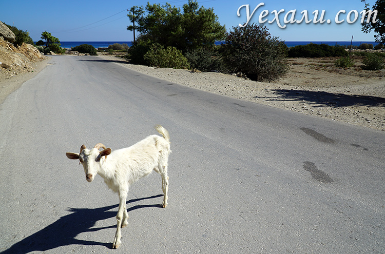 Греция, Родос. Дорога на пляж Цамбика.