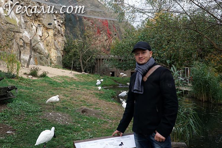 Пражский зоопарк.