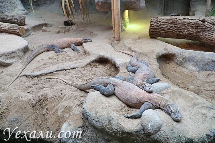 Зоопарк в Праге, Чехия. На фото: вараны.