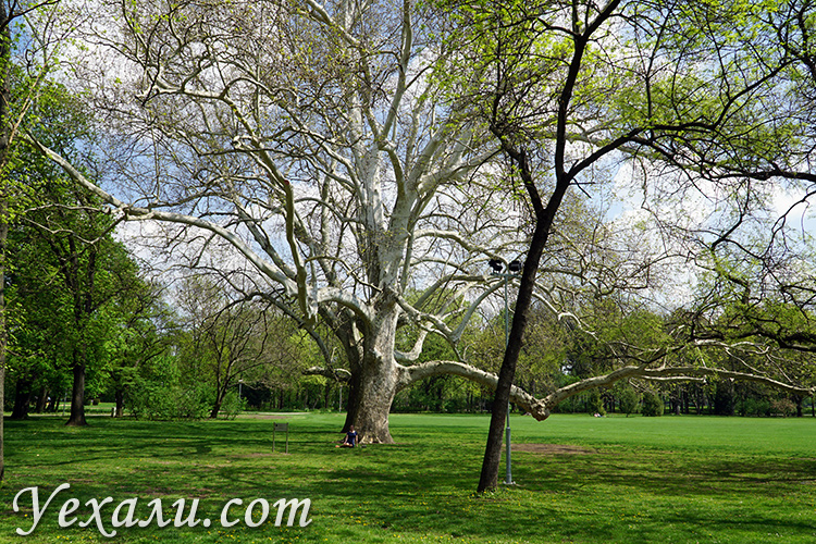 Деревья в парке Маргит