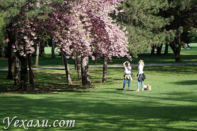 Фотосессия в парке Маргит