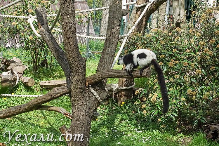 Зоопарк Будапешта (Венгрия)