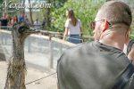 5 причин посетить зоопарк Будапешта + фото и полезная информация