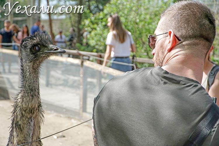 Зоопарк Будапешта в парке Варошлигет.
