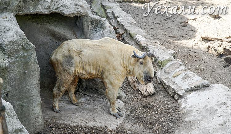 На фото: зоопарк Будапешта (Венгрия)