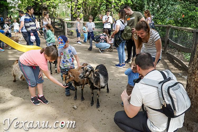 На фото: зоопарк Будапешта (Венгрия)/