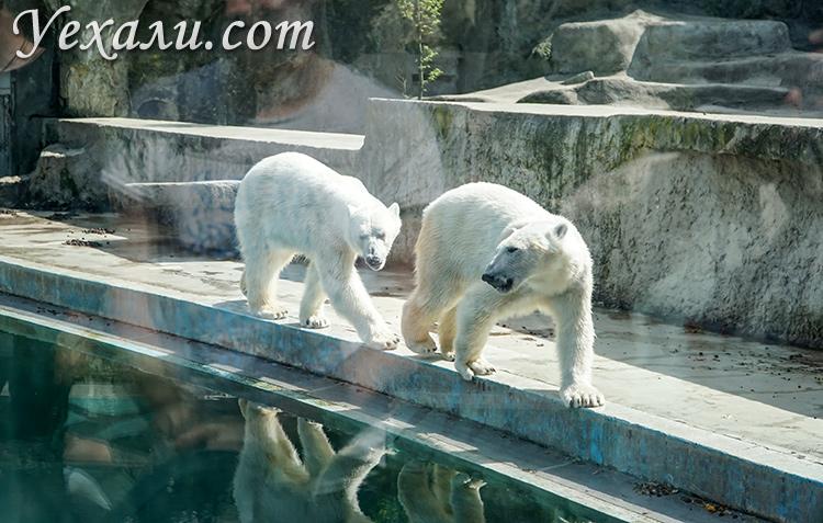 Зоопарк в Будапеште (Венгрия).