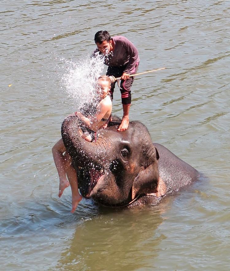Плавание со слонами в Таиланде