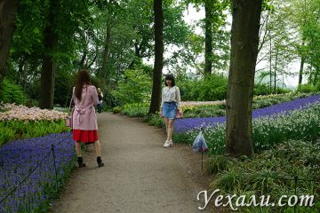 Фото парка цветов в Нидерландах