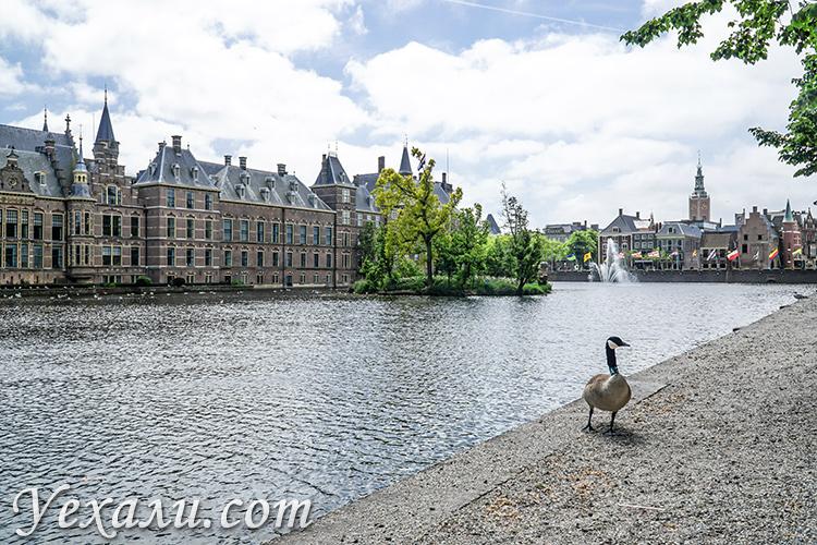 Куда съездить из Амстердама на 1 день: Гаага.