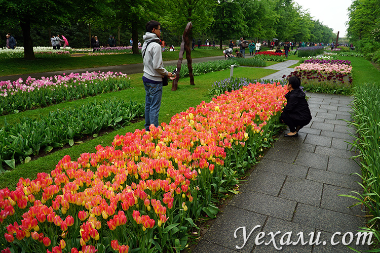 Фото и отзывы про парк тюльпанов Кекенхоф в Голландии