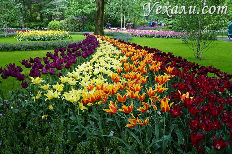 Фото и отзывы о парке Кекенхоф в Голландии