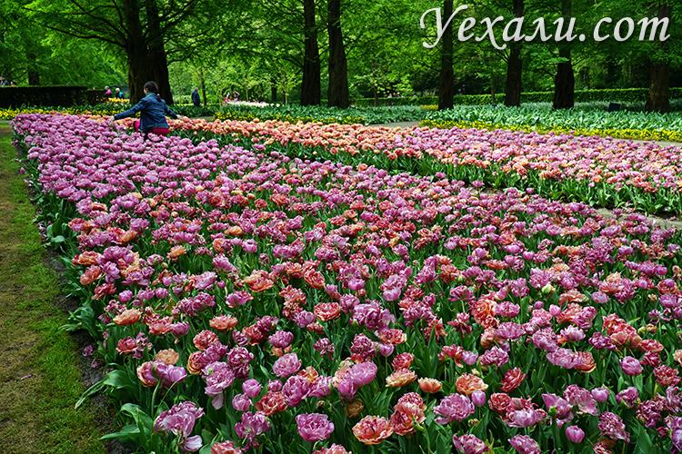 Парк цветов Кекенхоф в Лиссе