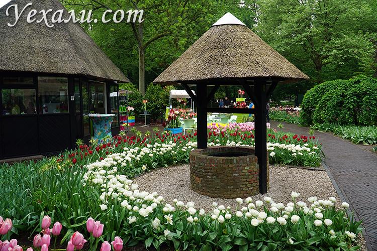Парк тюльпанов Кекенхоф в Нидерландах, фото и отзывы.