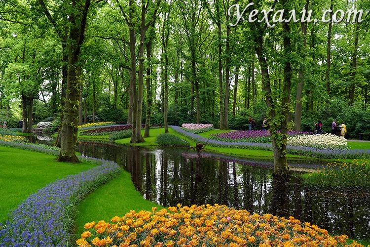 Парк тюльпанов Кекенхоф в Голландии.