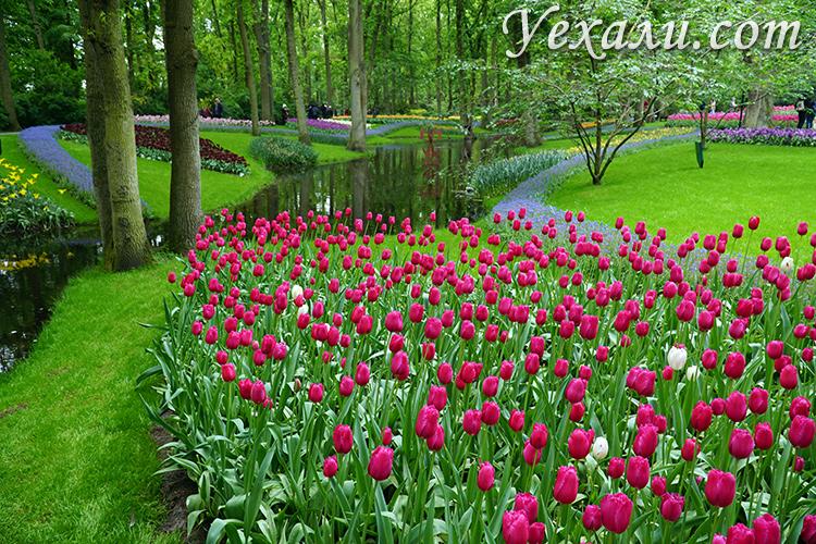 Фото парка тюльпанов Кекенхоф, Голландия.
