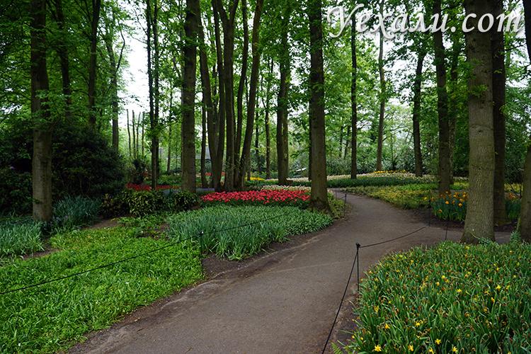 Аллеи королевского сада Кекенхоф, Голландия