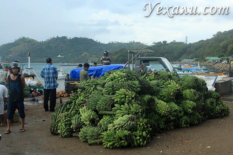 Сбор бананов в Индонезии