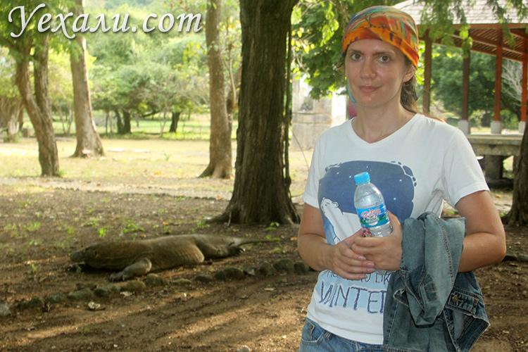 Экскурсия к комодским варанам с острова Флорес самостоятельно