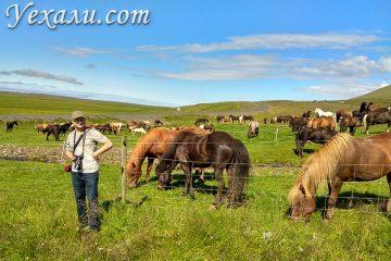 В какое время года надо ехать в Исландию