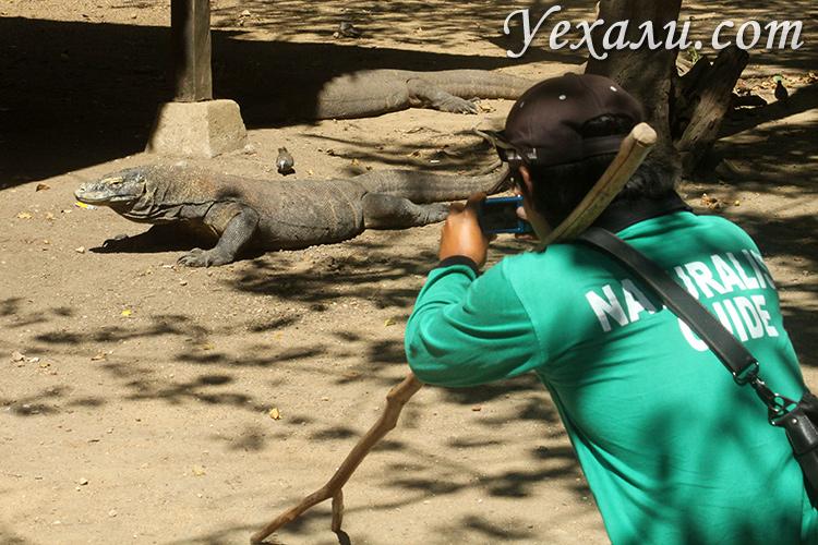 Рейнджер в национальном парке Комодо