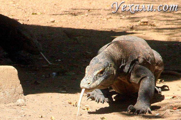 Комодский нацпарк Индонезия