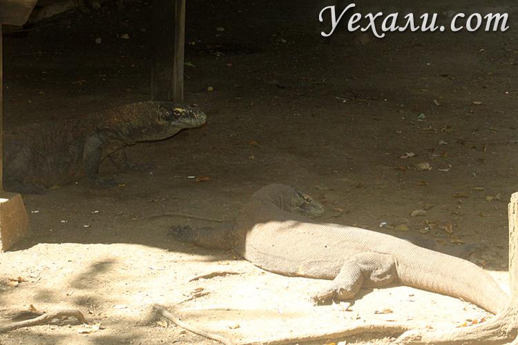 Экскурсия в национальный парк Комодо