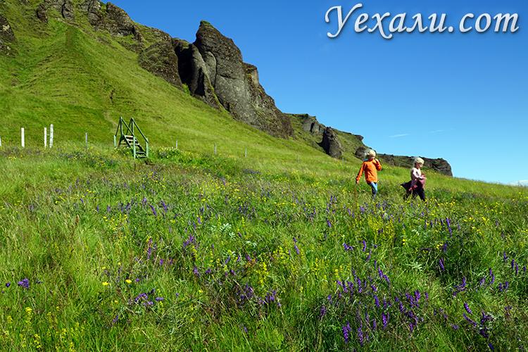 Когда лучше всего ехать в Исландию, фото Исландии летом