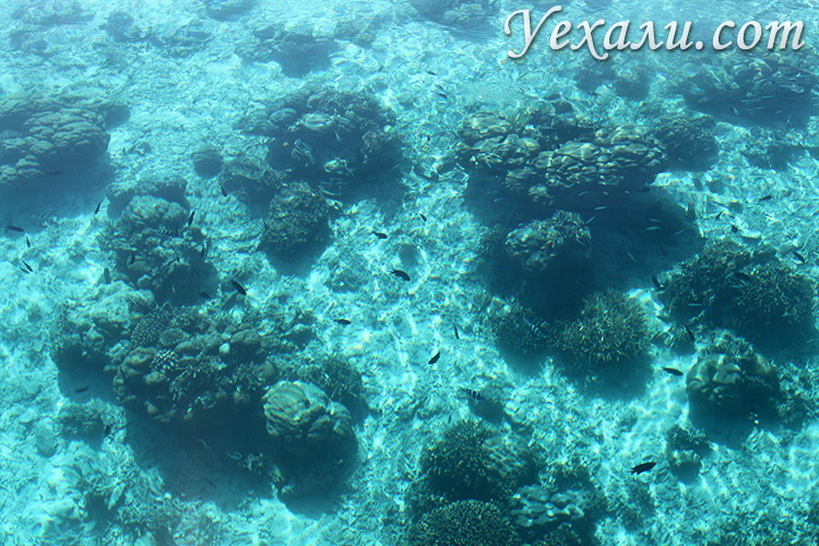 Кораллы в национальном парке Комодо