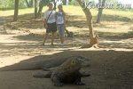 Как мы решили встретиться с легендарными драконами Комодо в Индонезии