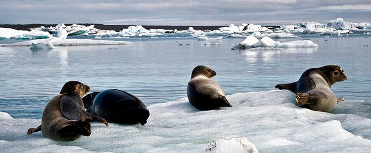 Ледяная лагуна Йокульсарлон в Исландии.