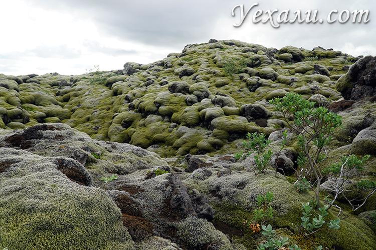 Экскурсии по лавовым полям Лаки в Исландии