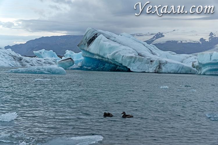 Самые красивые ледники Исландии. Лагуна Йокульсарлон.