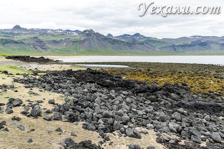 Западные фьорды Исландии. Желтый пляж.