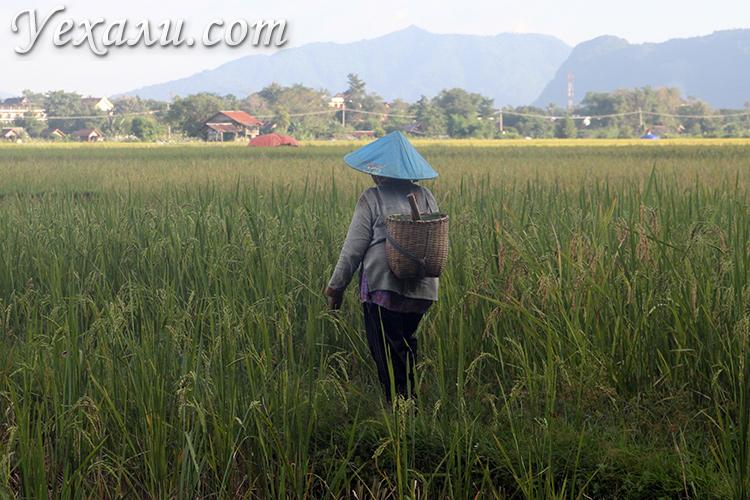 За чем едут в Ванг Вьенг в Лаосе туристы