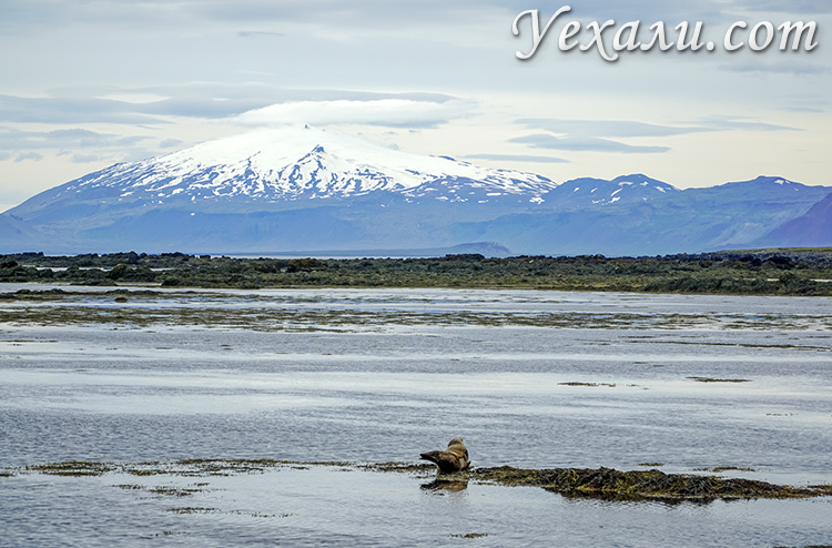 Тюлений пляж Ytri Tunga, Исландия.