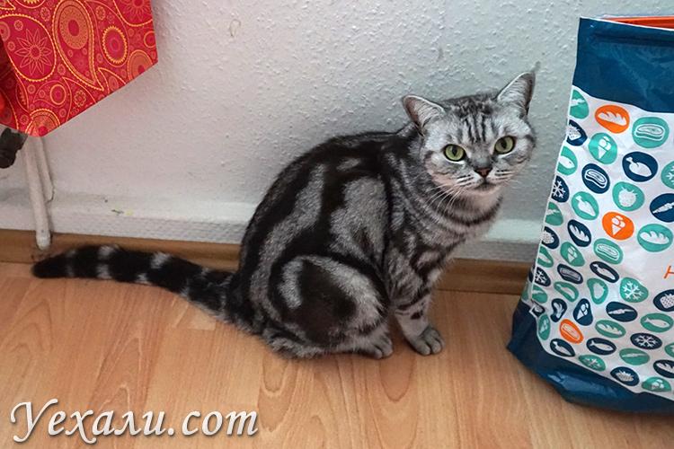 Красивый кот в Кельне